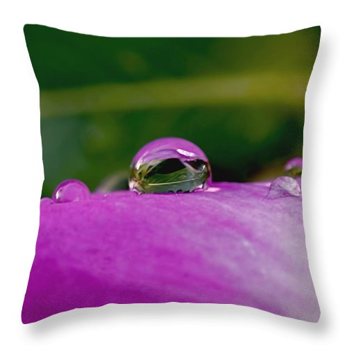 Fusion Throw Pillow featuring the photograph Fusion by Rona Black