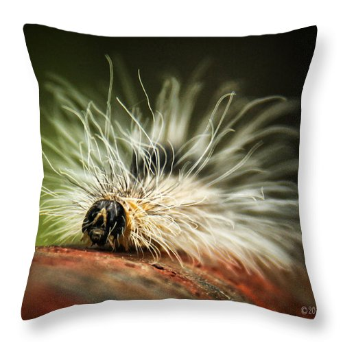 Fuzzy Was He Throw Pillow featuring the photograph Fuzzy Was He by Lucy VanSwearingen