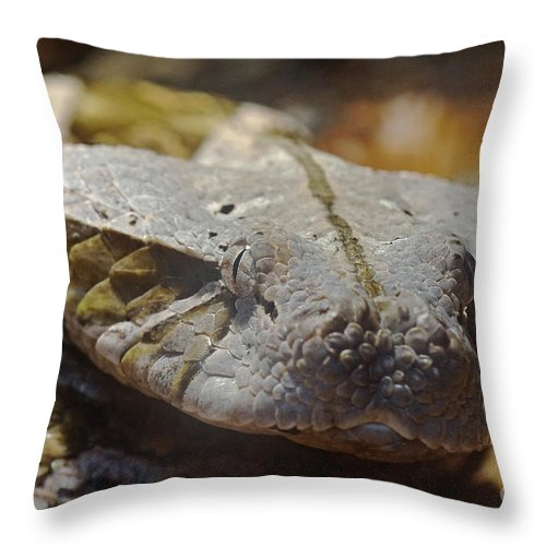 Nature Throw Pillow featuring the photograph Gaboon Viper by Rudi Prott