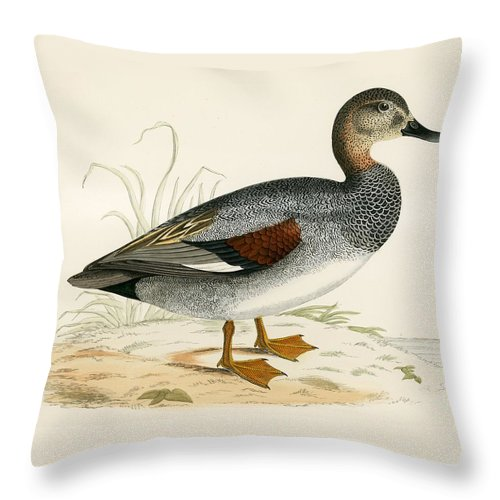 Birds Throw Pillow featuring the painting Gadwall by Beverley R Morris