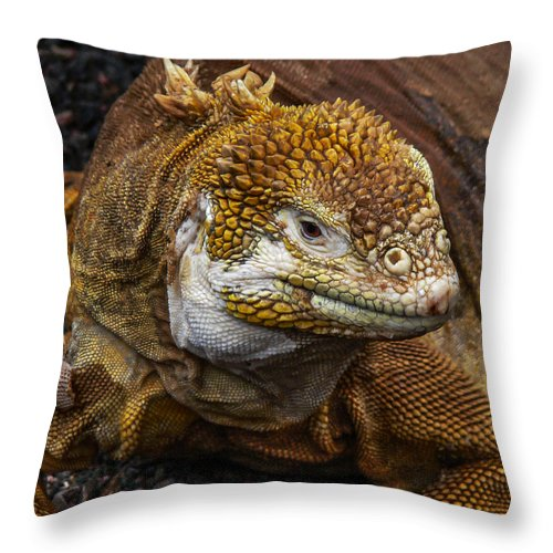 Galapagos Throw Pillow featuring the photograph Galapagos Land Iguana by Allen Sheffield