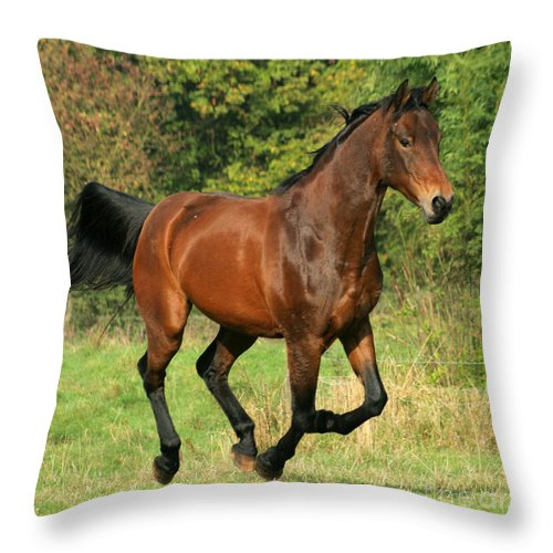 Horse Throw Pillow featuring the photograph Gallop by Angel Ciesniarska