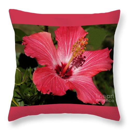 Hibiscus Throw Pillow featuring the photograph Garden Beauty by Ann Horn