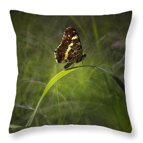 Grass Throw Pillow featuring the photograph Garden Stories I by Jaroslaw Blaminsky