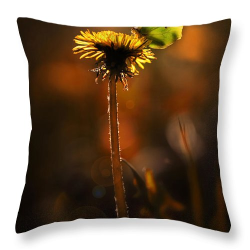 Grass Throw Pillow featuring the photograph Garden Stories II by Jaroslaw Blaminsky
