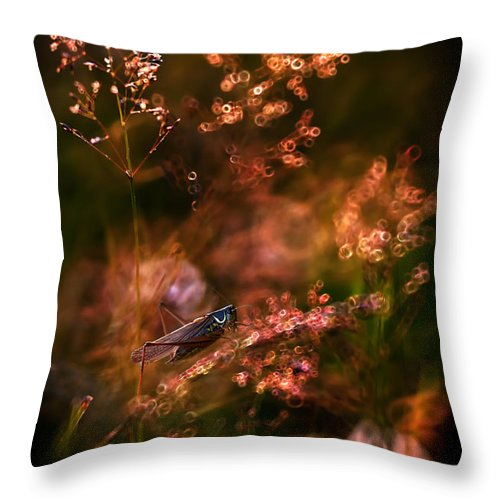 Grass Throw Pillow featuring the photograph Garden Stories Viii by Jaroslaw Blaminsky