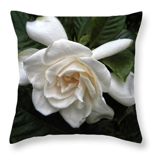 Flower Throw Pillow featuring the photograph Gardenia by Jessica Jenney