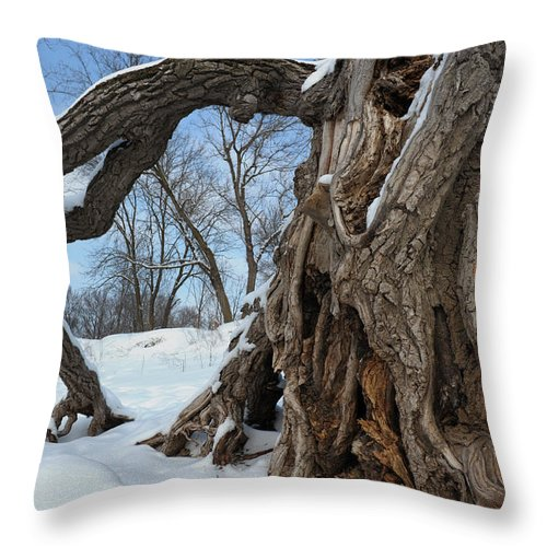 Cottonwood Throw Pillow featuring the photograph Gateway To The River Bottoms by Primal Traces