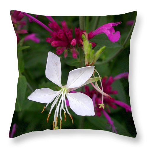 Throw Pillow featuring the photograph Gaura Lindheimeri Whirling Butterflies With Agastache Ava by Cynthia Wallentine