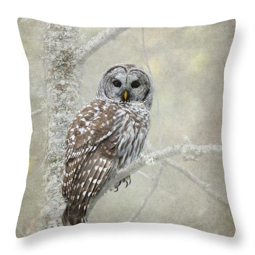 Bird Of Prey Throw Pillow featuring the photograph Guardian Of The Woods by Beve Brown-Clark Photography