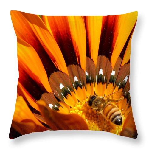 Gazanias Throw Pillow featuring the photograph Gazania Pollination by Ernie Echols