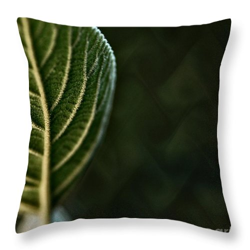Genetic Fabric Throw Pillow featuring the photograph Genetic Fabric by Chris Fleming