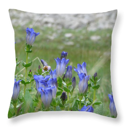 Gentiana Spp. Throw Pillow featuring the photograph Gentian Wildflowers by Pam Little