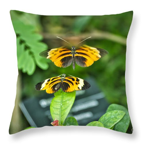 Il Throw Pillow featuring the photograph Gentle Butterfly Courtship 01 by Thomas Woolworth