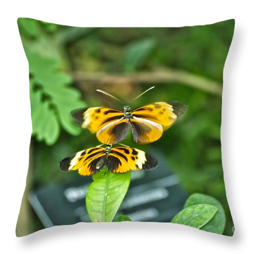 Mating Throw Pillow featuring the photograph Gentle Butterfly Courtship 02 by Thomas Woolworth