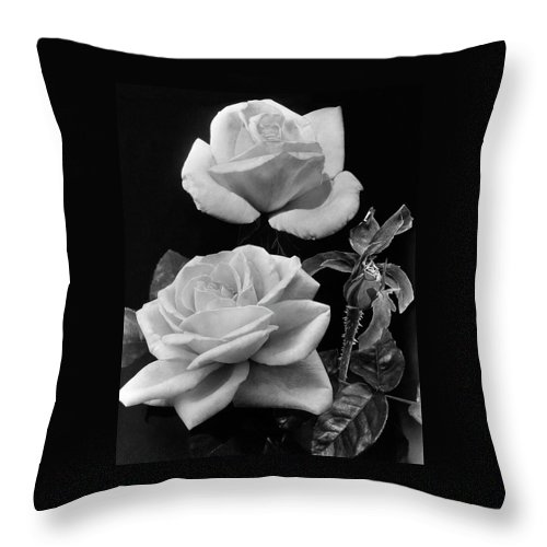 Flowers Throw Pillow featuring the photograph 'george Arends' Roses by J. Horace McFarland