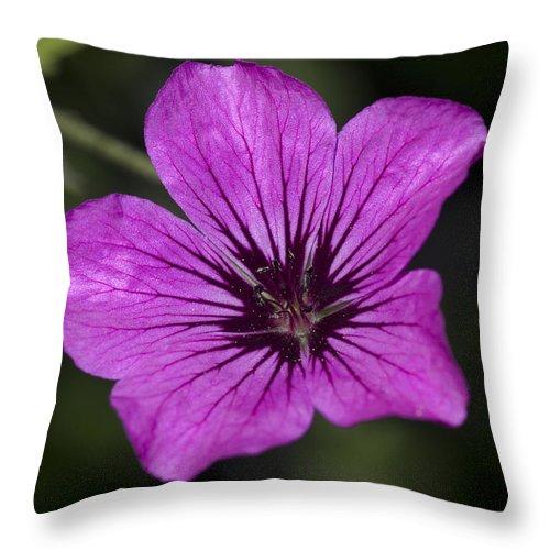 Geranium Sanguinium Throw Pillow featuring the photograph Geranium Sanguinium by Richard Thomas