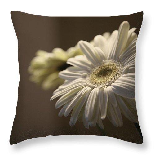 Gerber Throw Pillow featuring the photograph Gerber Daisy Flower by Raleigh Art Gallery