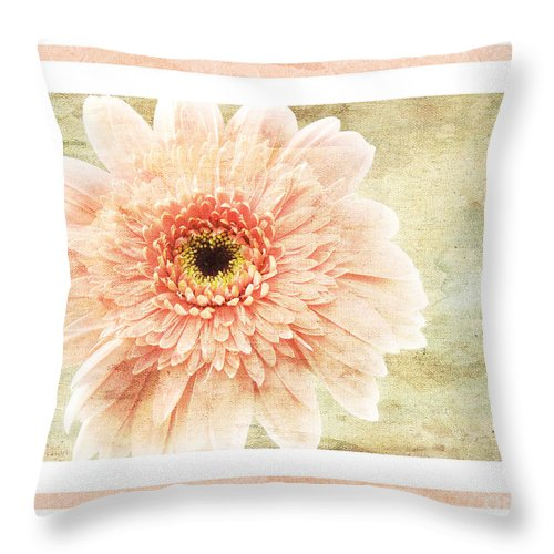 Gerber Throw Pillow featuring the photograph Gerber Daisy 1 by Andee Design