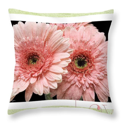 Gerber Throw Pillow featuring the photograph Gerber Daisy Love 4 by Andee Design