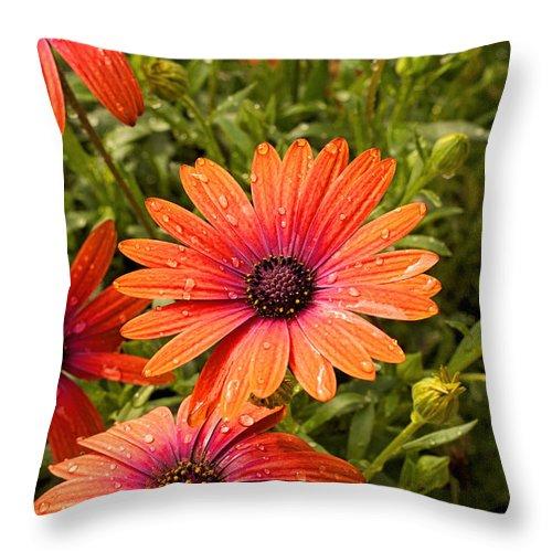 Flower Throw Pillow featuring the photograph Gerbera Daisy by Michael Porchik