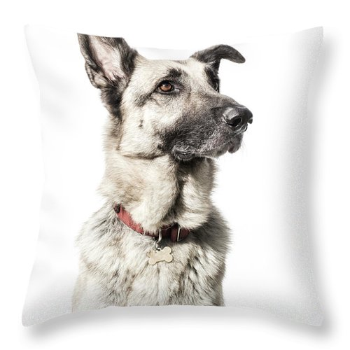Pets Throw Pillow featuring the photograph German Shepherd - The Amanda Collection by Amandafoundation.org