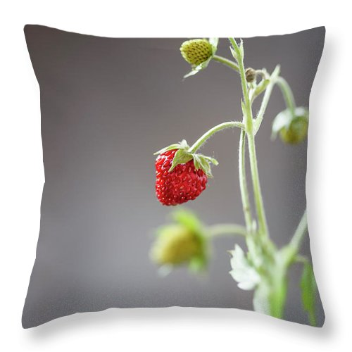 Wild Strawberry Throw Pillow featuring the photograph Germany, Baden Wuerttemberg, Wild by Westend61
