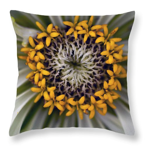 Outdoors Throw Pillow featuring the photograph Germany, Zinnia Flower, Close Up by Westend61
