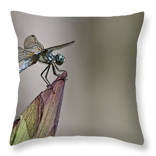 Get A Grip Throw Pillow featuring the photograph Get A Grip by Wes and Dotty Weber