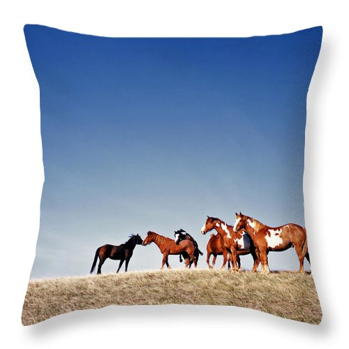 Horses Throw Pillow featuring the photograph Getting Frisky by Carla P White