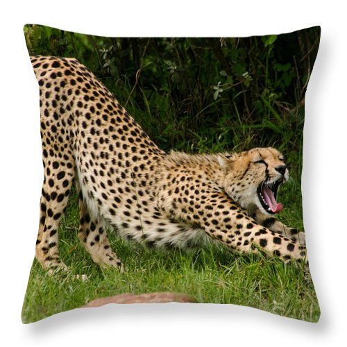 Stretching Throw Pillow featuring the photograph Getting Ready by Menachem Ganon