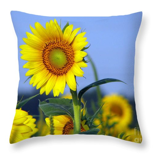 Sunflower Throw Pillow featuring the photograph Getting To The Sun by Amanda Barcon