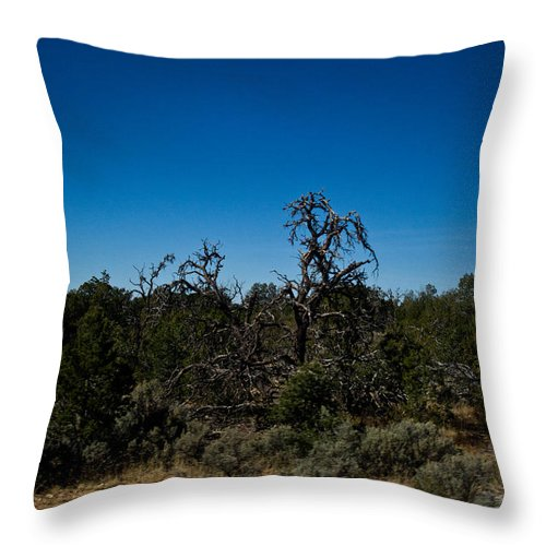 Ghost Throw Pillow featuring the photograph Ghost Tree Of The West by Douglas Barnett