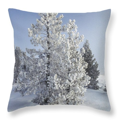 Yellowstone Throw Pillow featuring the photograph Ghost Trees Of Yellowstone by Sandra Bronstein