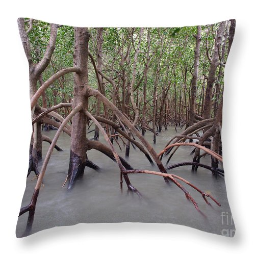 Australia Throw Pillow featuring the photograph Ghostly Mangroves by Focus Far and Wide