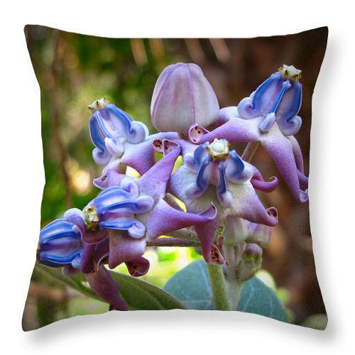 Phil Throw Pillow featuring the photograph Giant Milkweed by Phil Penne