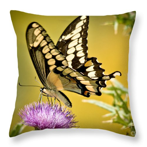 Throw Pillow featuring the photograph Giant Swallowtail On Thistle by Cheryl Baxter