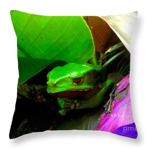 Giant Waxy Monkey Tree Frog Throw Pillow featuring the photograph Giant Waxy Monkey Tree Frog by Phillip Rangel