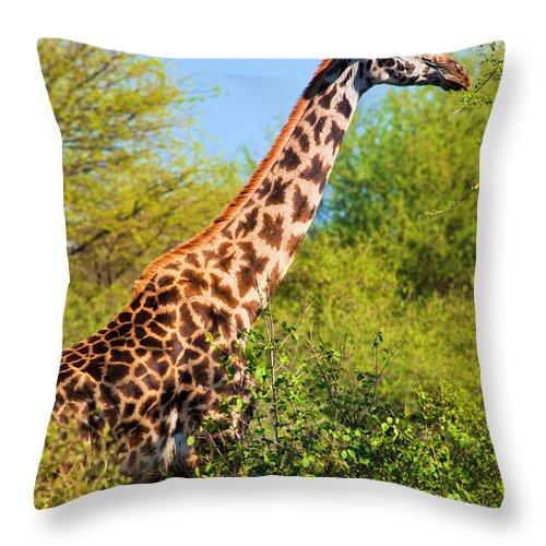 Giraffe Throw Pillow featuring the photograph Giraffe Among Trees. Safari In Serengeti. Tanzania by Michal Bednarek