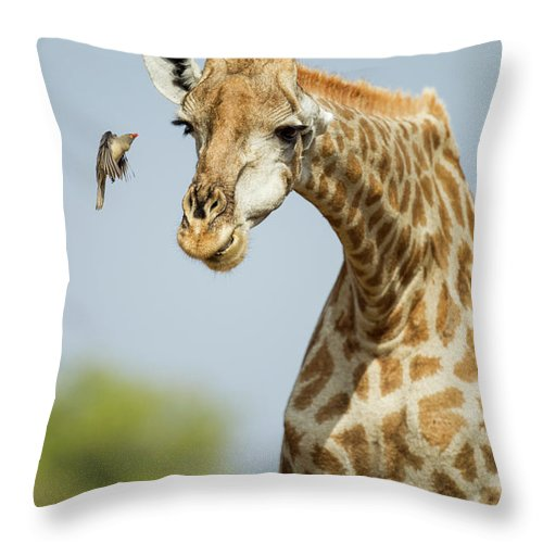 Botswana Throw Pillow featuring the photograph Giraffe And Red-billed Oxpecker by Paul Souders