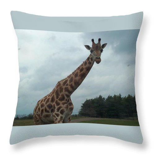 Wildlife Throw Pillow featuring the photograph Giraffe by Barbara McDevitt