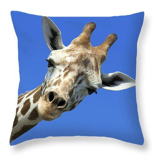 Africa Throw Pillow featuring the photograph Giraffe by John Greim