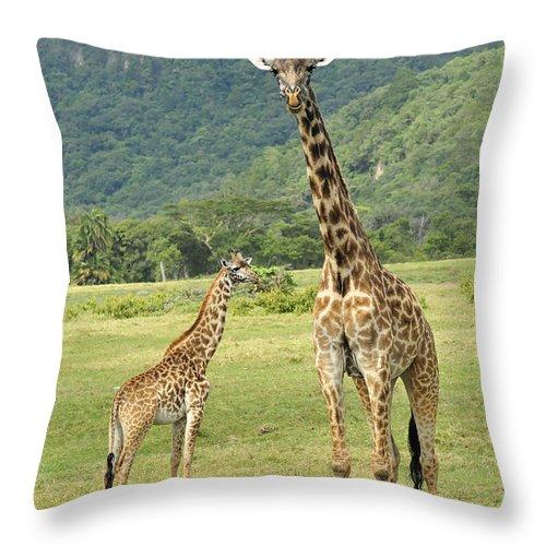 Thomas Marent Throw Pillow featuring the photograph Giraffe Mother And Calftanzania by Thomas Marent