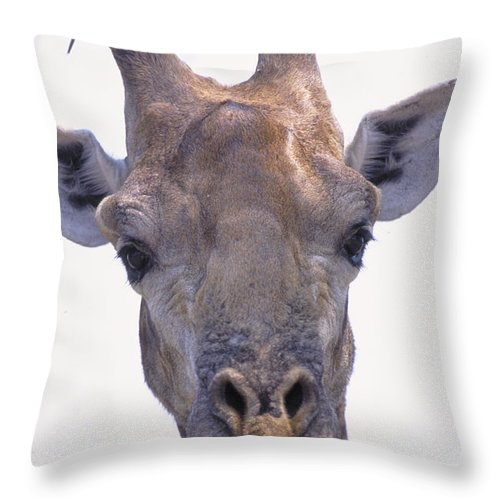 Giraffes Throw Pillow featuring the photograph Giraffe by Art Wolfe
