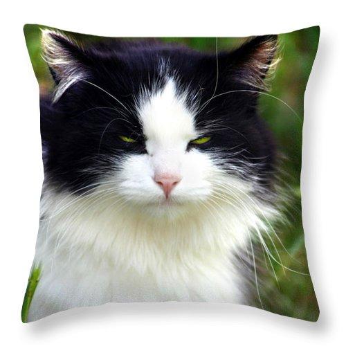 Kelly Hazel Throw Pillow featuring the photograph Glaring Cat by Kelly Hazel