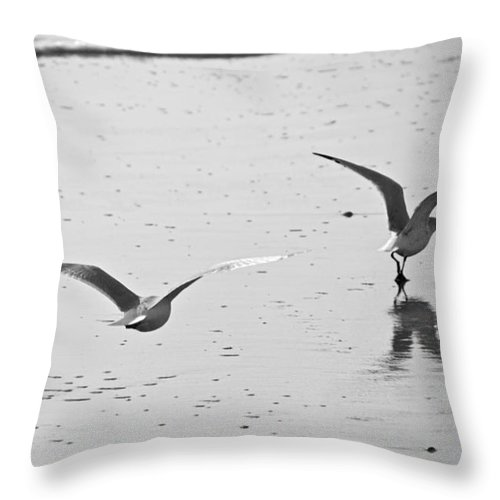 Seagull Throw Pillow featuring the photograph Glide Path by Scott Evers
