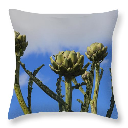 Agriculture Throw Pillow featuring the photograph Globe Artichokes by Diane Macdonald