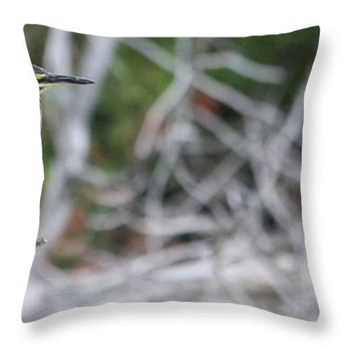 Heron Throw Pillow featuring the photograph Glorious Day by Sue Chisholm