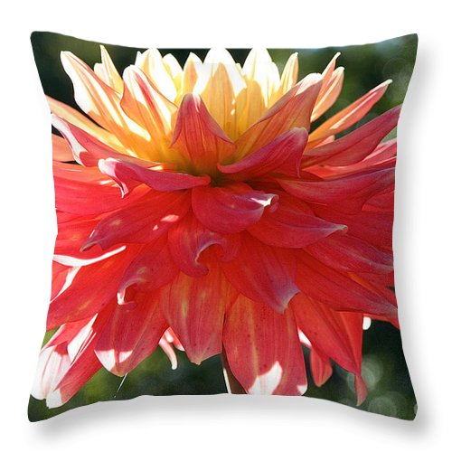 Flower Throw Pillow featuring the photograph Glorious Day by Susan Herber