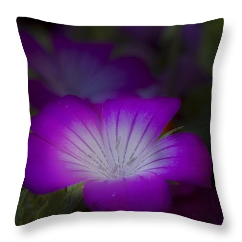 Flower Throw Pillow featuring the photograph Glow by Robert Woodward